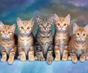5 cats with long whiskers looking ahead puzzle