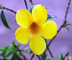 Yellow flower of five petals puzzle printable jigsaw mightylinksfo