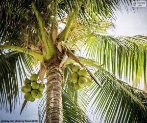 A coconut tree puzzle