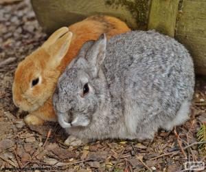 A couple of rabbits puzzle