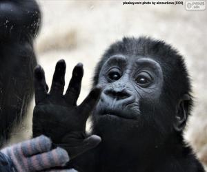 A curious monkey puzzle