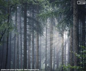 A dense forest puzzle