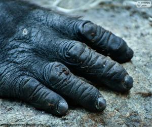 A gorilla hand puzzle