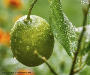A green lemon puzzle