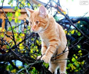 A kitten in a tree puzzle