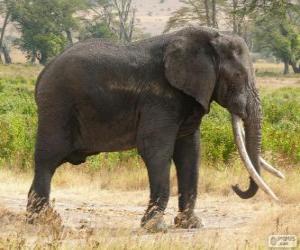 A large elephant puzzle