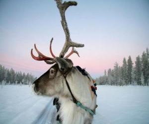 A Santa Claus's reindeer pulling a sleigh puzzle