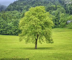 A tree in the meadow puzzle