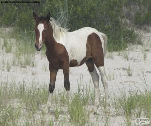 A young wild horse puzzle