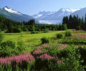 Alaska in summer landscape puzzle