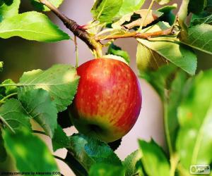 Apple in the tree puzzle