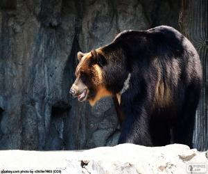 Asian black bear puzzle