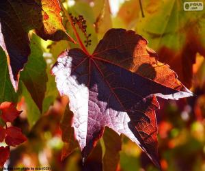 Autumn in the vineyard puzzle