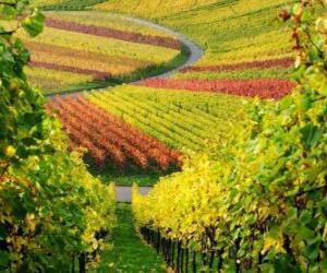 autumn landscape in the Vineyard puzzle