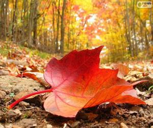 Autumn leaf puzzle