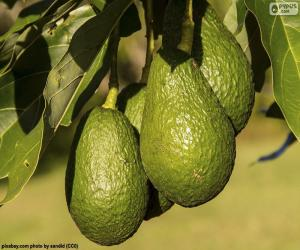 Avocados in the tree puzzle