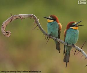 Böhm's bee-eater puzzle