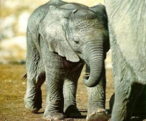 Baby elephant with its mother puzzle