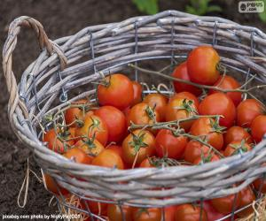 Basket of tomatoes puzzle