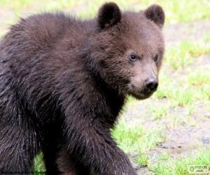 Bear cub, baby bear puzzle