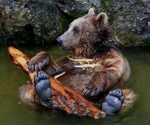 Bear in water puzzle