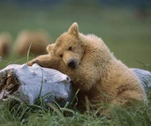 Bear resting on trunk puzzle