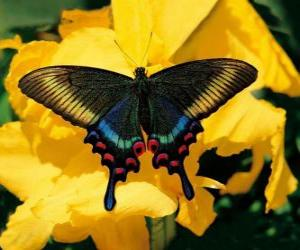 Beautiful butterfly on a yellow flower puzzle