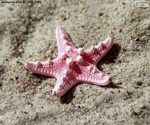 Beautiful starfish puzzle