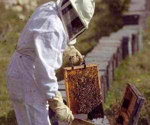Beekeeper or apiarist working with the special suit in the hive to collect honey puzzle