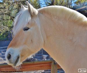 Beige horse head puzzle