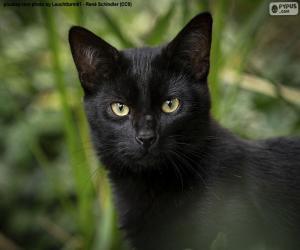 Black cat face puzzle