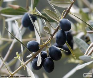Black olive branch puzzle