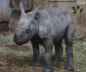Black rhino breeding puzzle