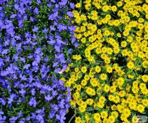 Blue and yellow flowers puzzle