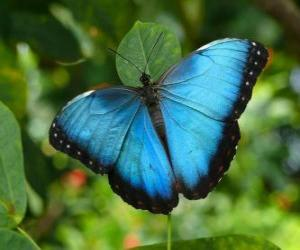 Blue butterfly puzzle