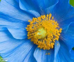 Blue flower puzzle