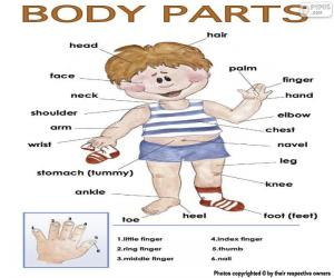 Body parts in English puzzle