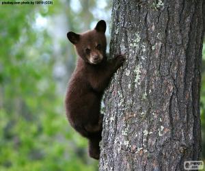Brown bear cub climbs a tree puzzle