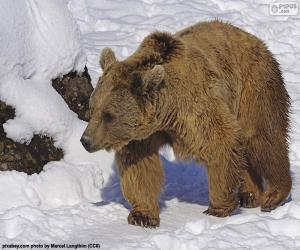 Brown bear on the snow puzzle