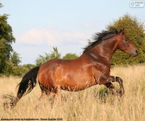 Brown horse running puzzle