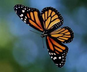Butterfly flying puzzle