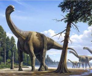Camarasaurus in the landscape puzzle