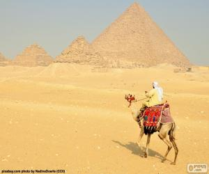 Camel front pyramids puzzle