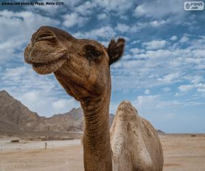 Camel in the desert puzzle