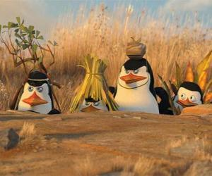 Camouflaged Penguins puzzle