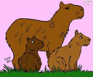 Capybara, Julieta Vitali puzzle