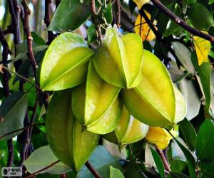 Carambola, exotic fruit puzzle