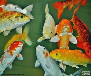 Carp of colors puzzle