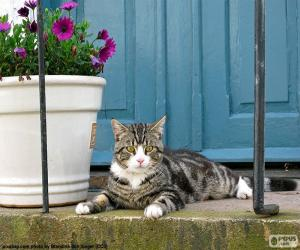 Cat and flowerpot puzzle