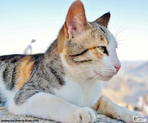 Cat observing puzzle